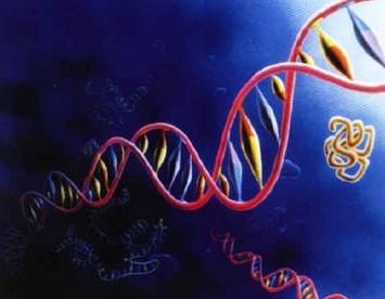 28):科学家发现dna分子双螺旋结构