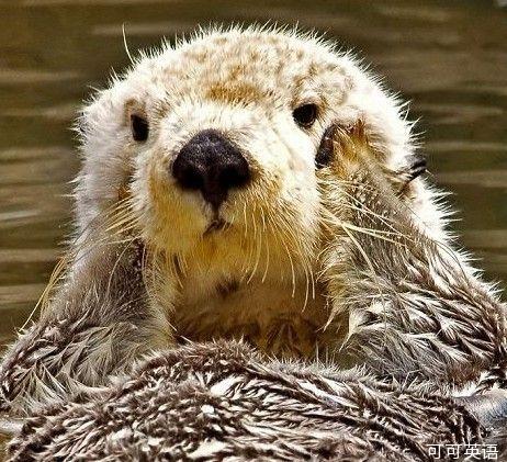 水獭可谓是动物王国最可爱的动物之一