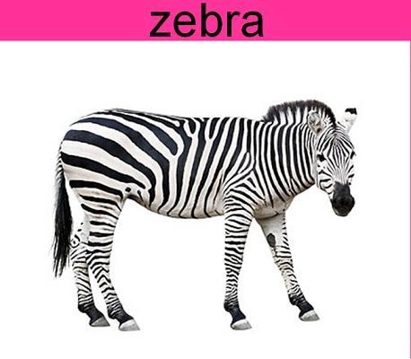 少儿看图识26个字母及配套单词:z之zoo和zebra