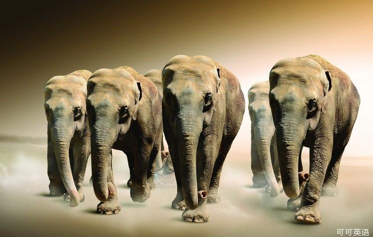 """大千世界:生活中对动物的十大""""误会"""""""