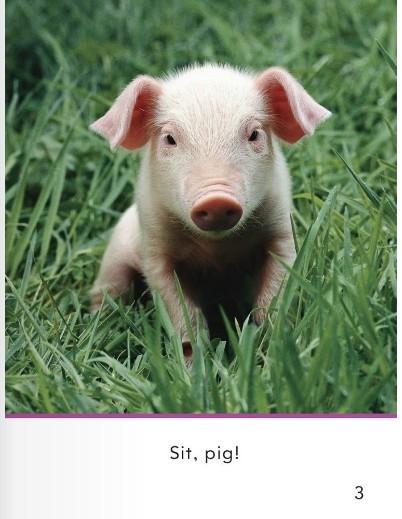 少儿英语学单词一年级 第3课:小猪坐下! sit, pig!