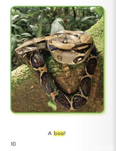 第18课:森林里的动物们