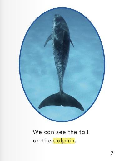 少儿英语学单词一年级 第9课:海洋动物 sea animals