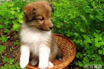 而且根据日本学者的这项研究,看可爱动物的图片似乎可以帮助我们集中