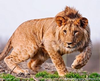 翻译词汇:拟声词—动物_翻译词汇 - 可可英语