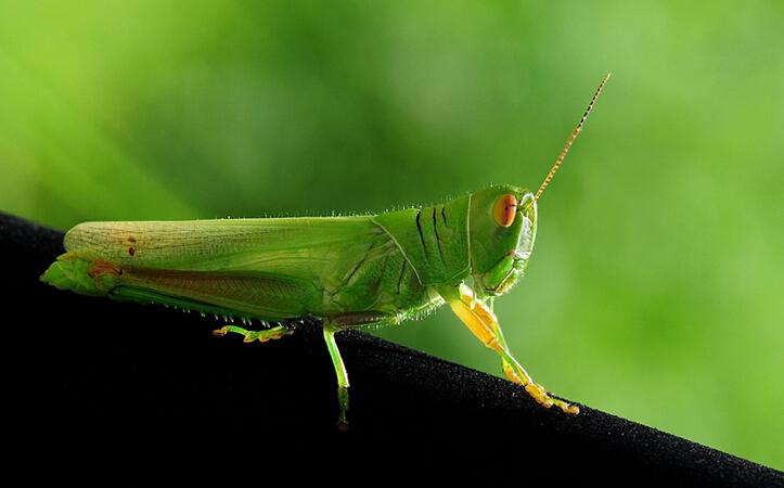 新奇事件簿(翻译+字幕+讲解+试题):昆虫数量锐减威胁人类安全.jpg