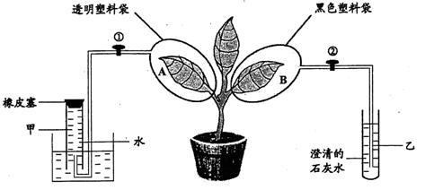 初中生物叶片结构实验图
