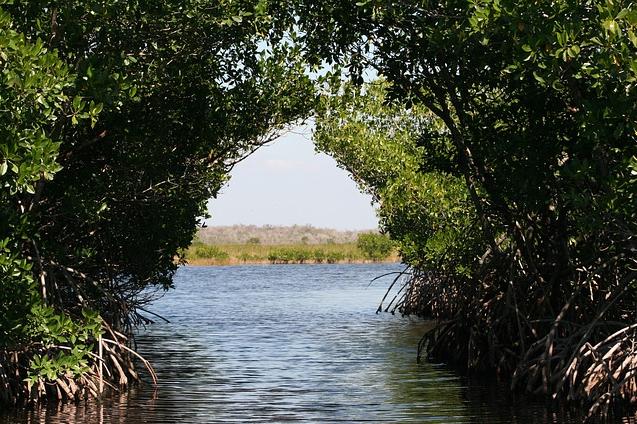 红树林沼地.jpg
