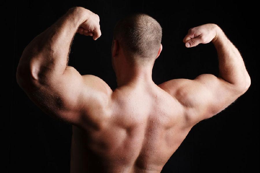 肌肉.jpg