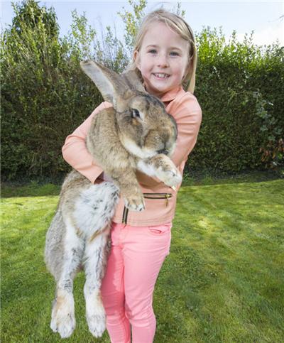 萌宠棒棒嗒:巨兔是超棒的宠物