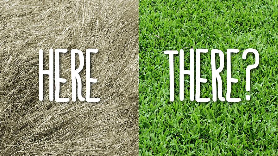 篱笆那边的草总是比较绿