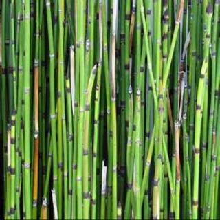 微信头像竹子图片大全