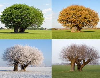 夏天,冬天,春天和秋天