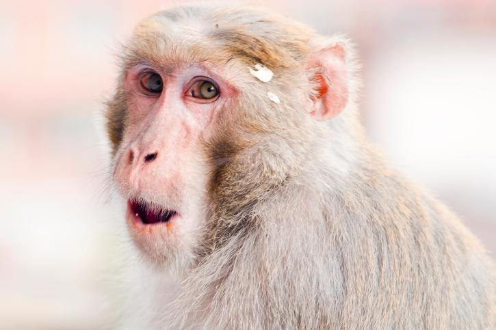 聪明的动物们做的十大趣事(上)