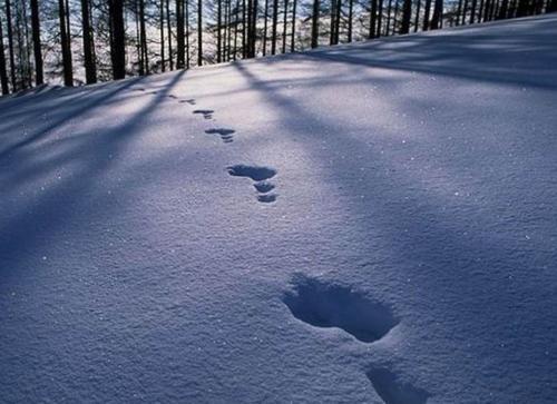 雪地里的脚印