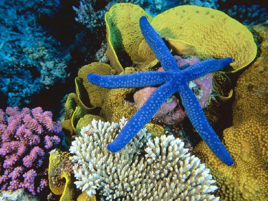 大堡礁.jpg