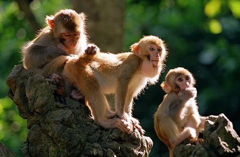 豆子粘贴画图片大全 动物猴子