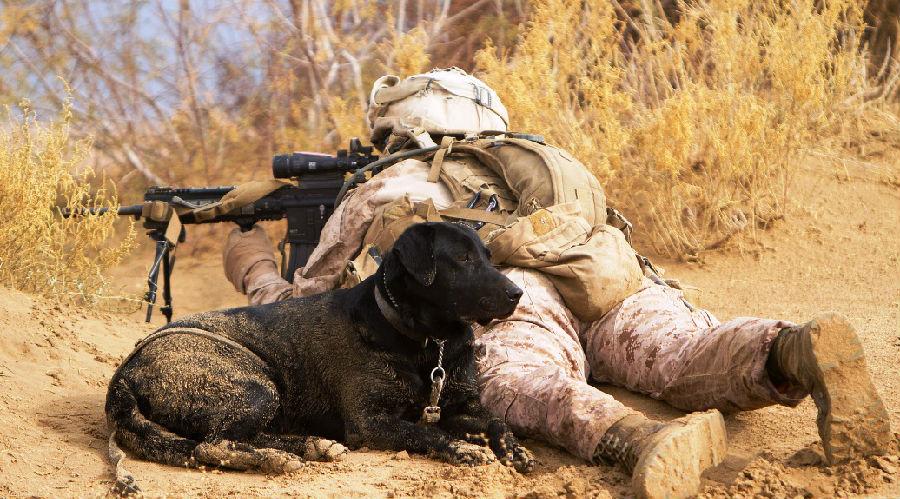 美国动物权益保护协会将会从军犬