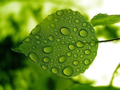 叶绿素的分解