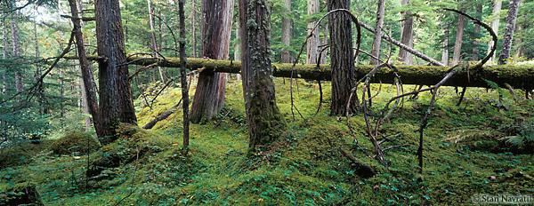 森林小树成长图片大全