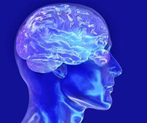 大脑中控制欲望的部分