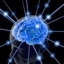 皮质醇对大脑的影响