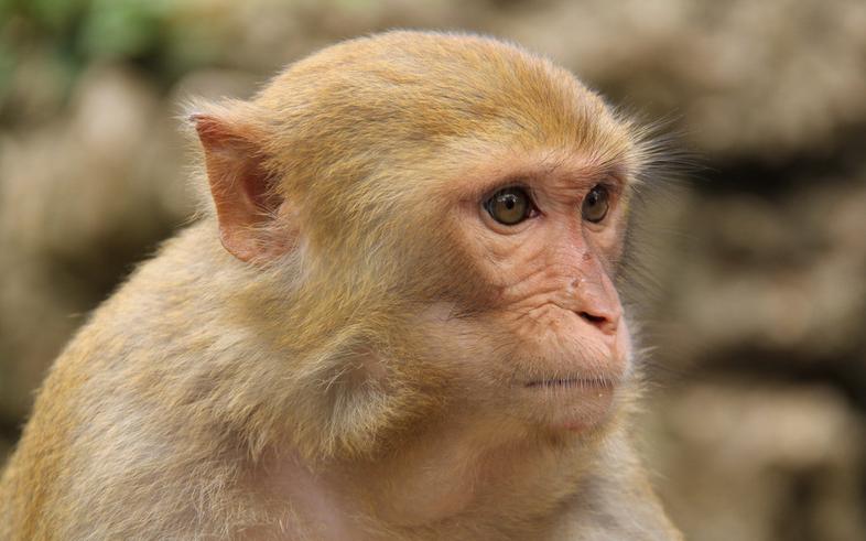 猴子通图片大全可爱