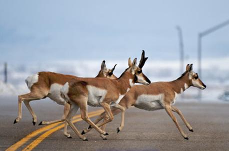 地球上速度最快的十种动物(下)_大千世界_双语阅读