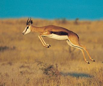 地球上速度最快的十种动物(下)
