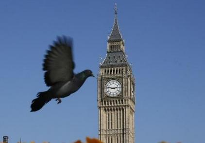 英国伦敦派出鸽子部队检测空气污染