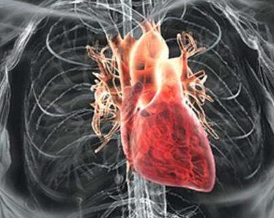 可汗学院《保健与医学:循环系统》第28期:循环系统与心脏(5)