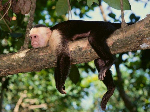 猴子漂洋过海.jpg