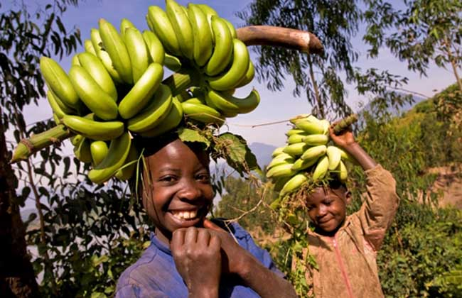 香蕉植物岩.jpg