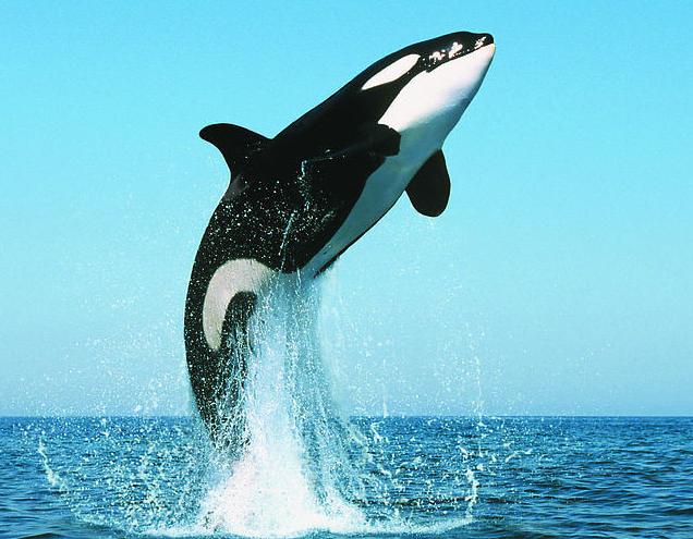 十大速度最快的海洋动物(上)