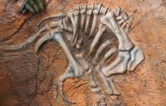 恐龙化石.jpg