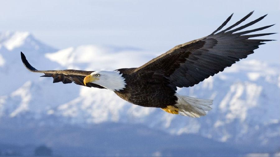 美国中英第四册(MP3+语文图片)第46期:鹰大全卖表情字幕包开心萌图片