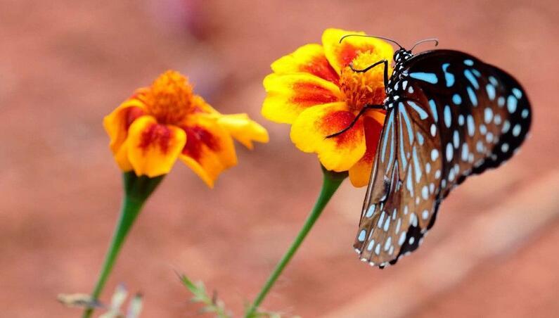 植物花粉传播.jpg