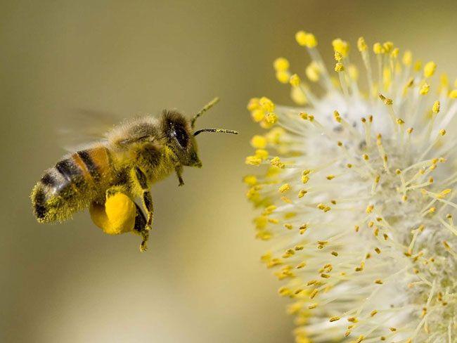 花粉传播.jpg