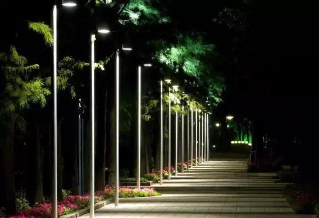 灯光欺骗树木.jpg