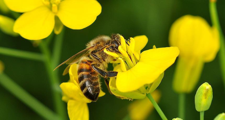 全球蜜蜂正面临危机.jpg