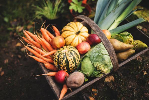 马拉维推行庭院蔬菜缓解食物短缺.jpg
