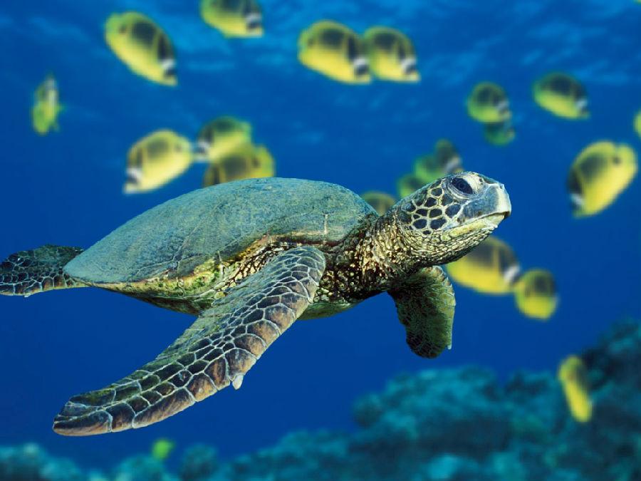 海龟.jpg