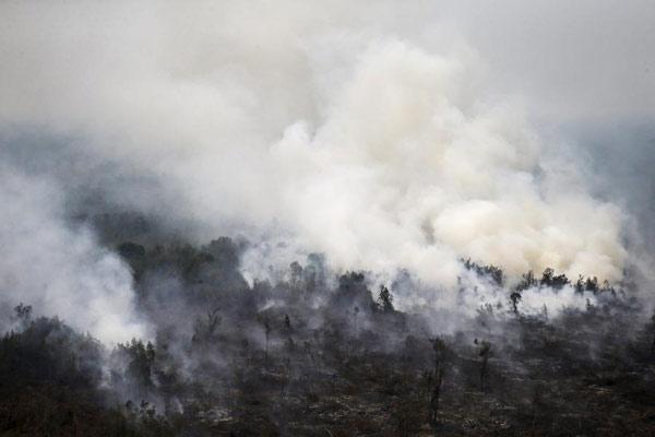 印尼火灾致10万人死于烟霾.jpg