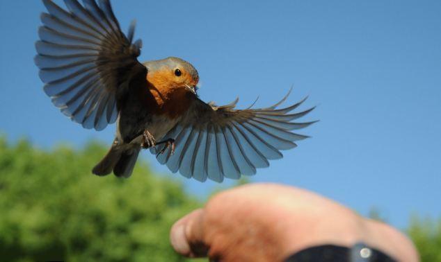 英国的鸟类灭绝.jpg