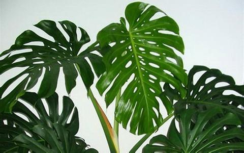 植物的智商