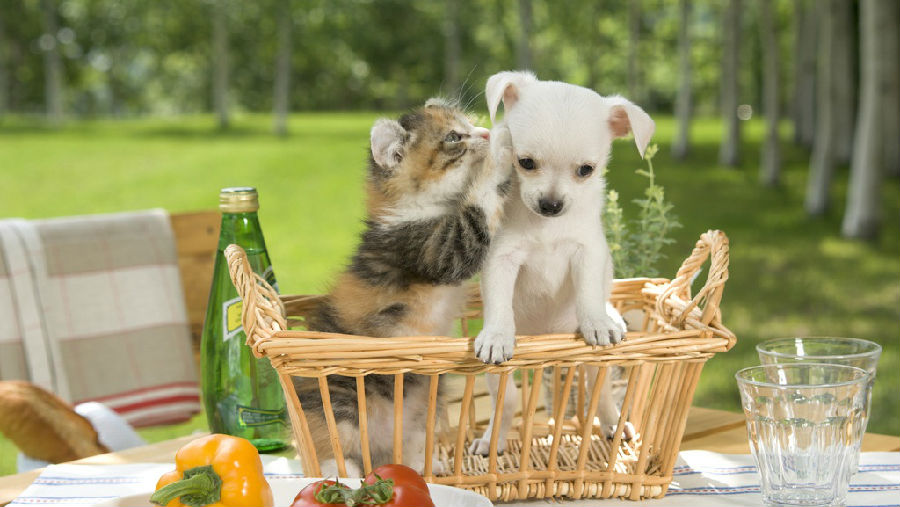 分享型经济犬类的空中食宿.jpg