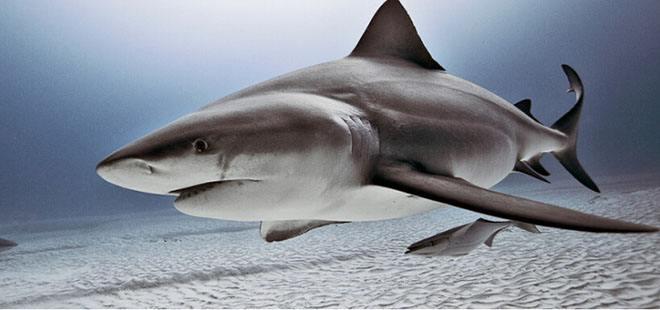 鲨鱼被吃掉半截.jpeg