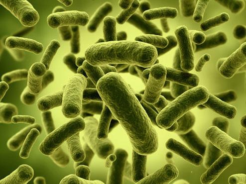 肠道菌群.jpg