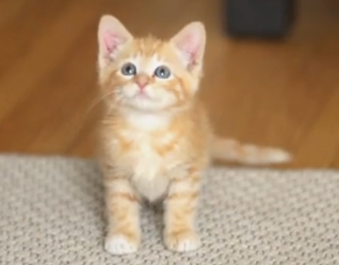 欧美创意广告(视频 mp3 中英字幕):创意温馨广告 致亲爱的猫咪