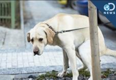 为什么狗狗排便前要转圈呢?